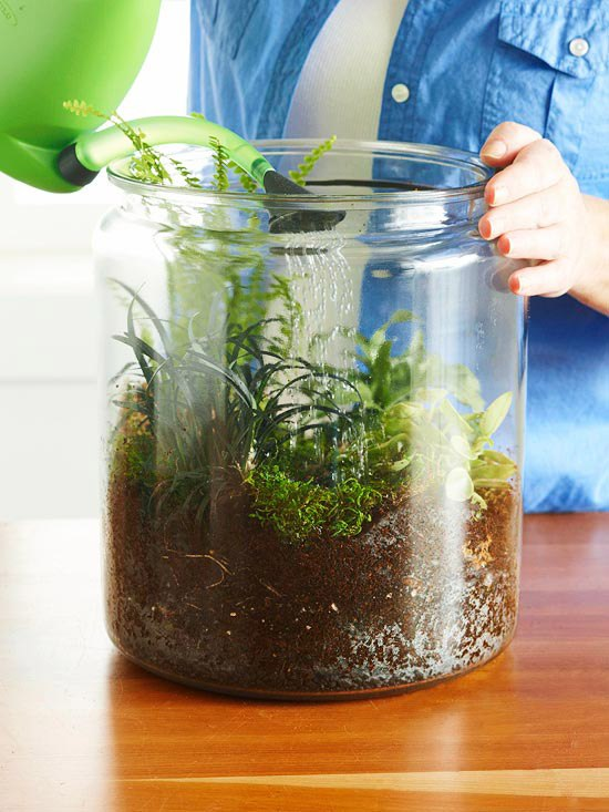полив растений во флорариуме