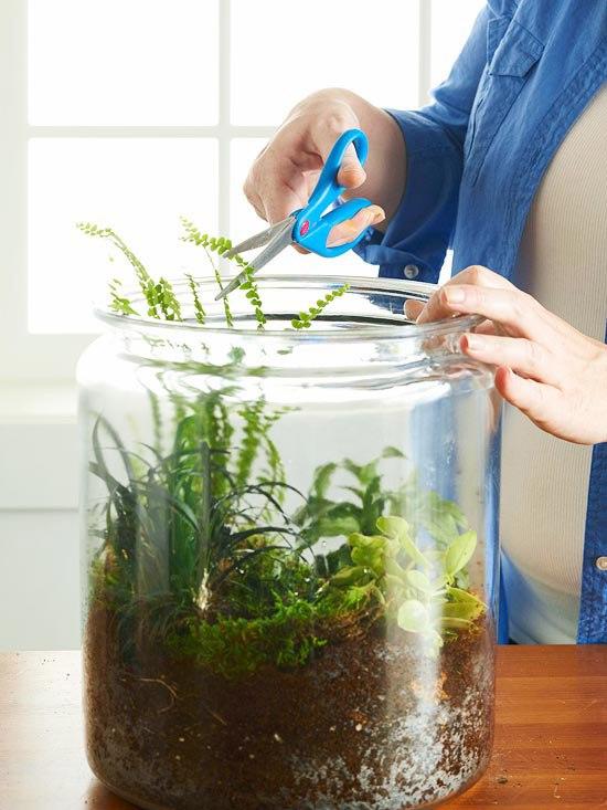 обрезка растений во флорариуме