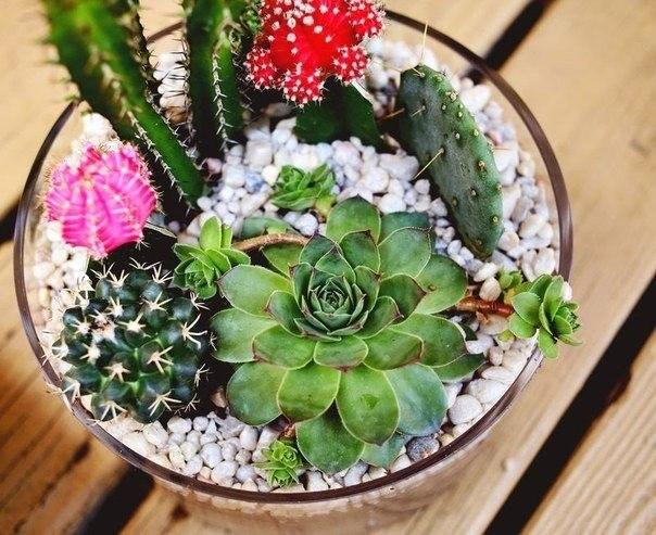 суккуленты и кактусы в вазе