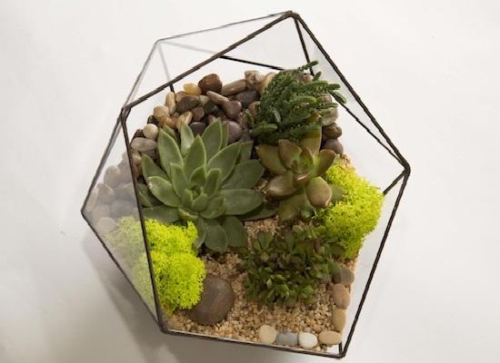 флорариум в многоугольном сосуде