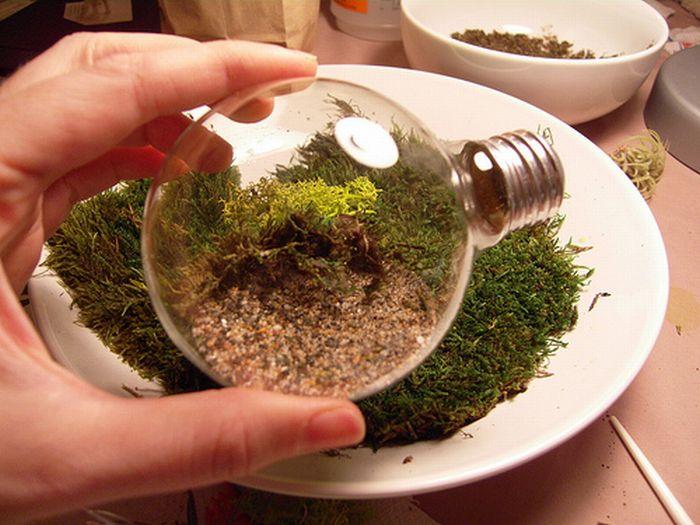 закладка растений